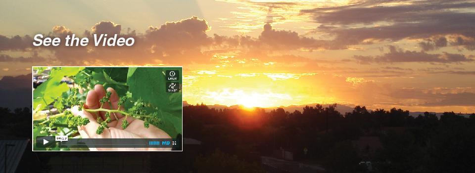 Sunrise on Ag HGVideo-01