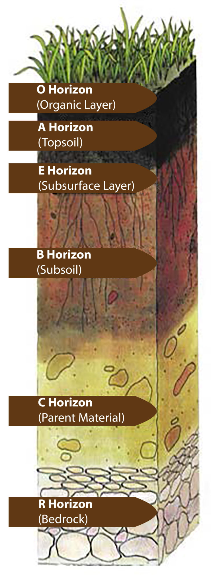 Image gallery soil horizons for 4 parts of soil